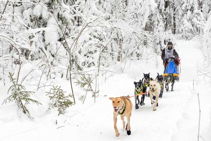 Một trong số cuộc khi lái xe chó kéo nổi tiếng của Nga là On the Land of Sampo