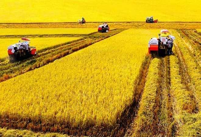 Trong TPP nhiều quốc gia có ngành nông nghiệp năng suất rất cao, gấp cả chục lần Việt Nam, với giá cả rất cạnh tranh.