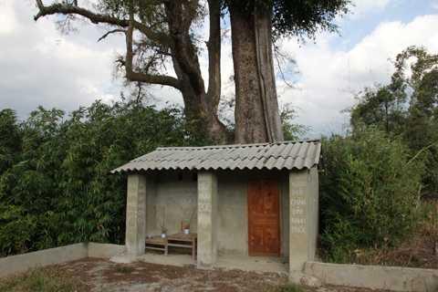 Ngôi miếu thờ cây và các vị thần