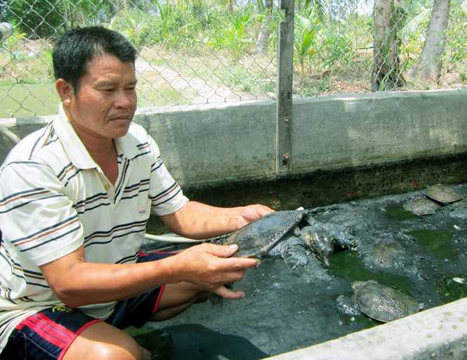 Ông Trần Văn Thường làm giàu từ mô hình nuôi cua đinh
