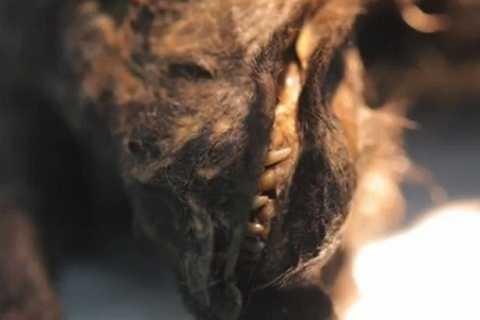 Con vật vẫn còn răng và bộ não vẫn còn nguyên vẹn.