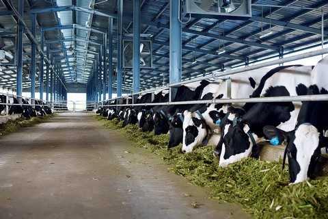 Trang trại Hà Tĩnh là trang trại bò sữa hiện đại bậc nhất, ứng dụng công nghệ hàng đầu trong chăn nuôi khi đưa vào sử dụng hệ thống làm mát hiện đại bậc nhất thế giới, gồm quạt gió và hệ thống phun sương… theo công nghệ Thụy Điển Tunnel Ventilation đảm bảo môi trường sống lý tưởng cho đàn bò sữa.