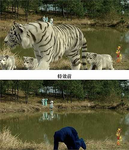 Bầy hổ trong phim (ảnh trên) và một diễn viên tạo dáng giống hổ (dưới). Đoàn làm phim đã sử dụng kỹ xảo trước khi đưa phim phát sóng.