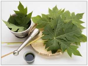 papaya-leaves-23-1466668574