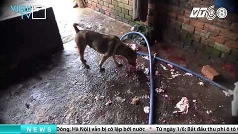 tham-nhap-lo-giet-mo-heo-banduong day mua ban heo chet dong nai_2