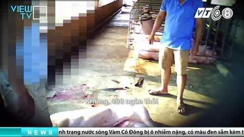 tham-nhap-lo-giet-mo-heo-banduong day mua ban heo chet dong nai_6