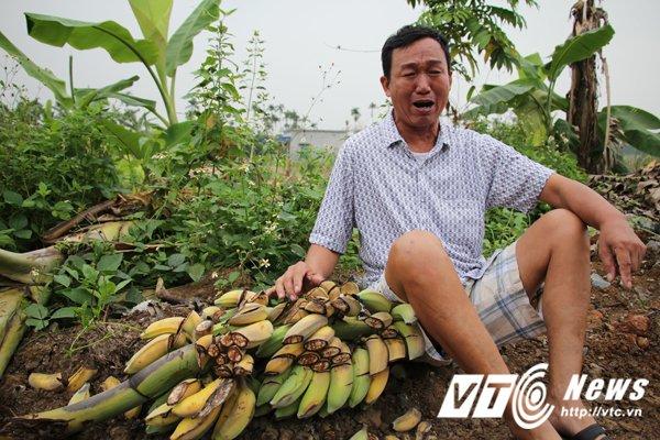 Hinh anh Anh: Hien truong hon 2ha chuoi bi nhom con do dat Cang dung dao kiem pha nat 23