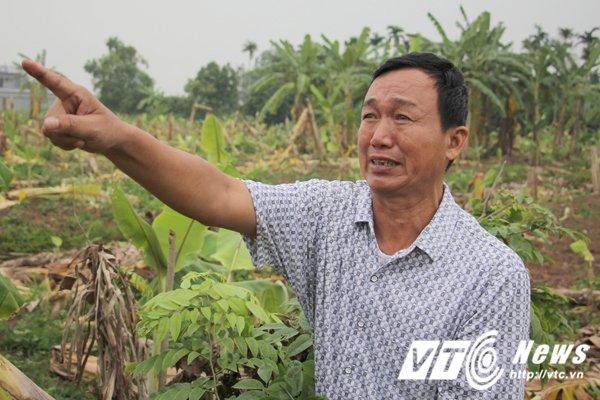 Hinh anh Anh: Hien truong hon 2ha chuoi bi nhom con do dat Cang dung dao kiem pha nat 31