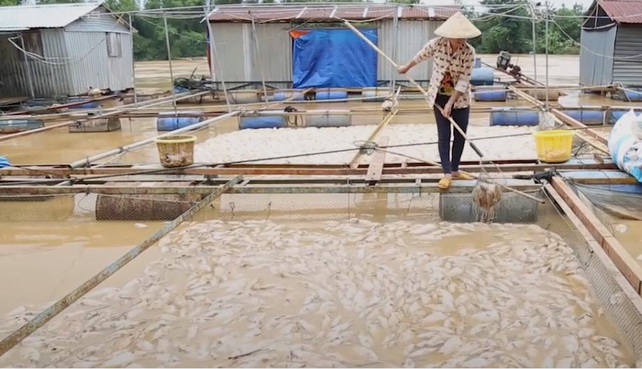 Video: Dân Đồng Nai đau đớn nhìn hơn 600 trăm tấn cá chết trắng sau lũ