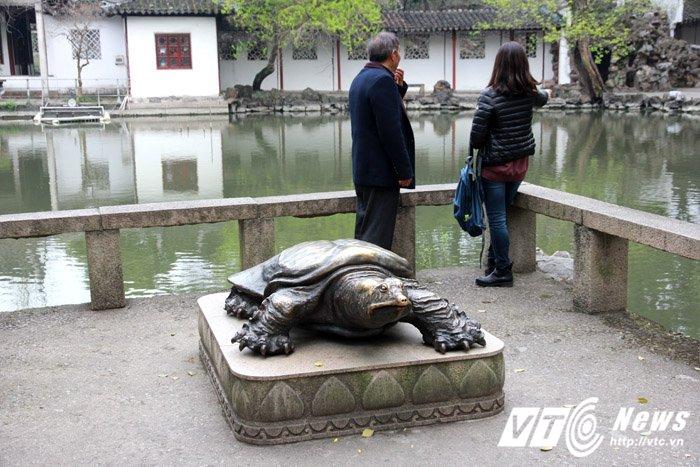 Hinh anh Ngo ngang hai con 'rua Ho Guom' khong lo o Tay Vien Tu 4