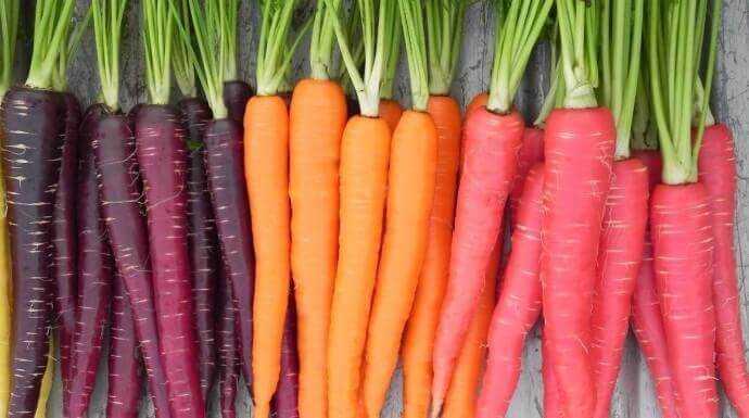 20170209213255-carottes-couleurs