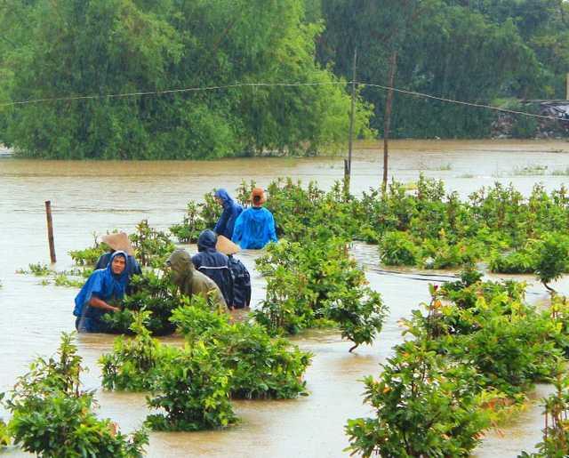 Người dân Nhơn An (thị xã An Nhơn, Bình Định) vật lộn trong nước lũ đưa mai lên cao tránh lũ