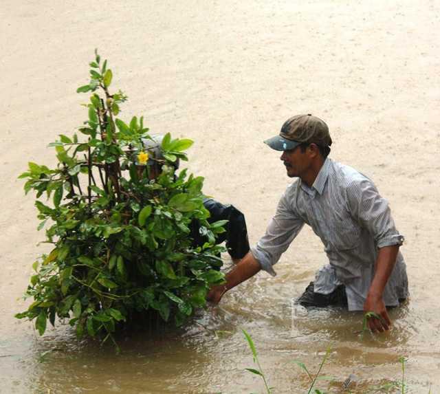 Bất chấp nước lũ chảy xiết người dân ngâm mình trong lũ cứu mai