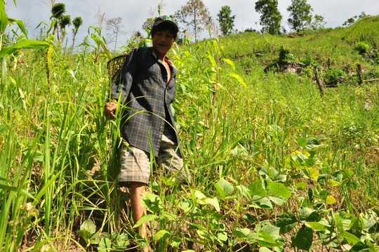 """Những lúc rãnh rỗi, """"người rừng"""" con Hồ Văn Lang đi rẫy săn bắt hái trầu câu. Ảnh: Tử Trực"""