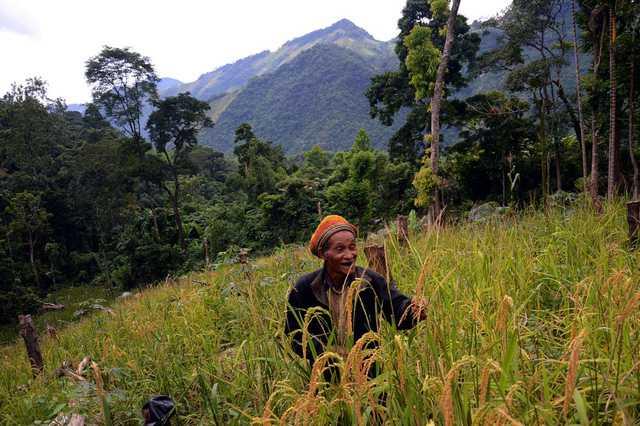 Để có lương thực sinh sống ở giữa rừng sâu, ông phát một khoảnh rẫy nhỏ gần chòi để gieo lúa. Khi lúa chín ông tuốt bằng tay, đưa về sấy trên gác bếp và khi cần gạo ăn ông lấy ra giã bằng chày, cối tự chế bằng thân cây.