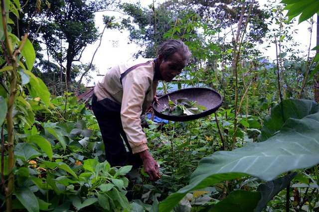 Xung quanh căn chòi của mình, ông Châu trồng rất nhiều rau xanh như rau lang, bầu, bí, ớt, nghệ… để cung cấp cho bữa ăn.