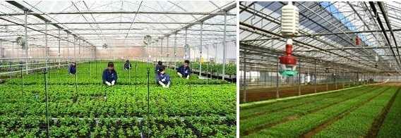 Nhân lực kỹ thuật cao trong lĩnh vực Nông nghiệp ở Việt Nam luôn có nhu cầu lớn