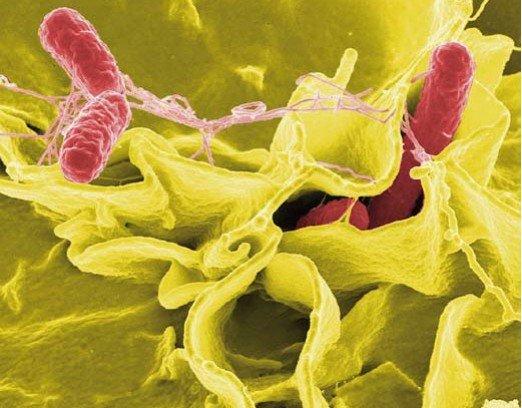Salat Bakterien 3
