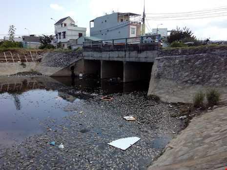 Đà Nẵng: Cá chết nổi trắng kênh Đa Cô - ảnh 4