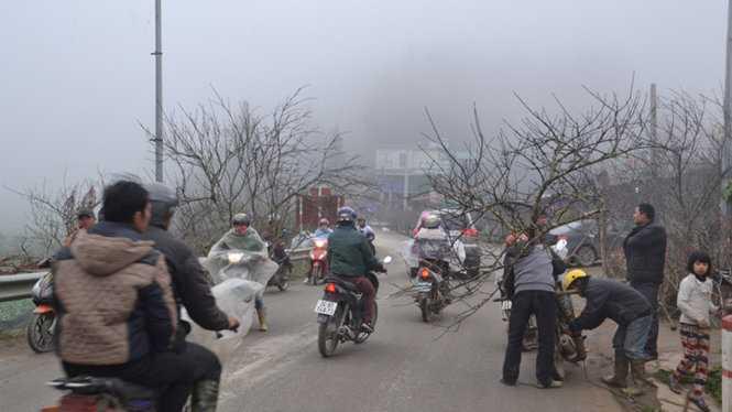 Đào rừng xuống phố - Ảnh: Hồng Thảo