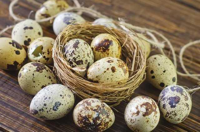 5 lợi ích tuyệt vời của trứng cút - Ảnh 1.