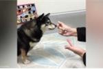 Phì cười với phản ứng của chú chó khi xem chủ làm ảo thuật