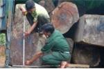 Nhóm 20 người trấn áp kiểm lâm để cướp lại xe chở gỗ lậu