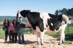 Video, ảnh: Cận cảnh 'siêu' bò nặng 1 tấn, cao 2 mét ở Mỹ