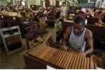 Bí mật cigar Cuba qua con mắt người 'trong cuộc' - Kỳ II: Xì gà Cuba được làm như thế nào?