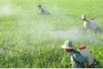 Học sinh chế tạo thuốc trừ sâu sinh học từ… cây dại