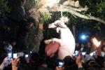 Treo cổ trâu tại lễ hội Đông Cuông: Sẽ không còn cảnh tượng man rợ