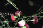 Máy bay Nga rơi: Dân thả hoa xuống Biển Đen tưởng niệm nạn nhân