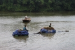 Xe trâu vượt lũ sông Ngàn Sâu cõng lúa về nhà