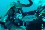 Clip: Bạch tuộc khổng lồ cướp máy ảnh của thợ lặn