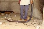 Chuyện khủng khiếp ở làng nhốt đại xà: Kẻ mất mạng, người chặt tay, rạch thịt để sống sót