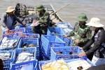 Bắt giữ đối tượng vận chuyển 120 con sam trái phép tại Quảng Ninh