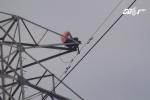 Thanh niên 'ngáo đá' cố thủ trên cột điện cao thế làm 2 tỉnh mất điện suốt 8 giờ