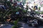 Cây xanh gãy đổ quật ngã 3 xe máy trên đường phố Sài Gòn