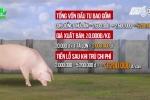Giá thịt lợn 'rẻ nhất thế giới', dân Ngọc Lũ trắng tay, phá sản