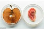Thành tựu khoa học gây sốc: 'Trồng' tai người trên táo
