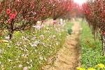 Dạo quanh vườn hoa Tết tại các địa phương