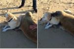 Video: Hải cẩu và chó ôm nhau quấn quýt trên bãi biển