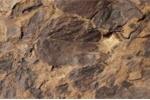 Bí mật triệu năm của hàng trăm mảnh hóa thạch bị cháy