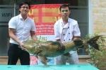 Đại gia Hà Nội chi 40 triệu nhậu con cá lăng quý hiếm