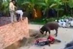 Video: Bắn hạ trâu 'điên' đại náo làng quê, húc 3 người bị thương