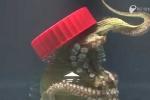 Thảng thốt clip bạch tuộc tự mở nắp bình đóng kín thoát ra ngoài