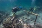 Bí ẩn con tàu đắm 500 tuổi dưới đáy biển và đồng bạc quý hiếm được tìm thấy