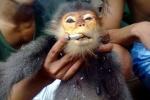 Kẻ giết khỉ khoe facebook từng ăn chơi lêu lổng