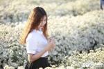 Ảnh: Thiếu nữ Hà Thành khoe sắc cùng 'cơn sốt hoa cúc họa mi'