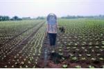 Nông dân 'lên đời' nhờ bắt tay với doanh nghiệp